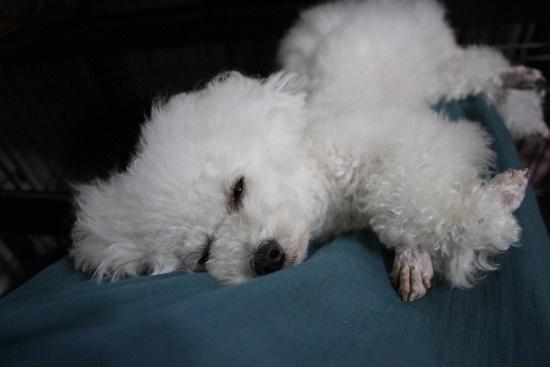 茉莉花の寝顔