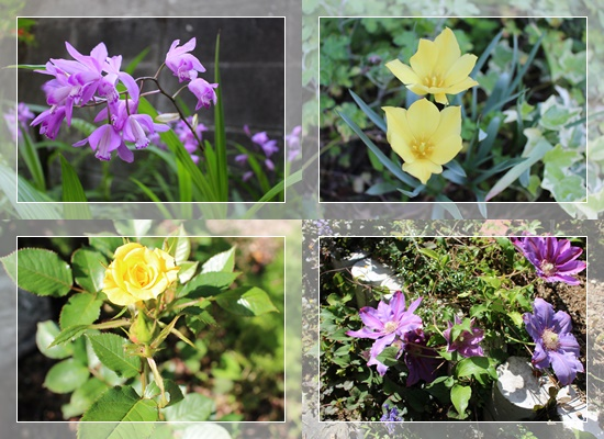 MyGarden_201604270048273cd.jpg