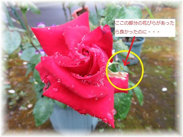 IMG_4586.jpg