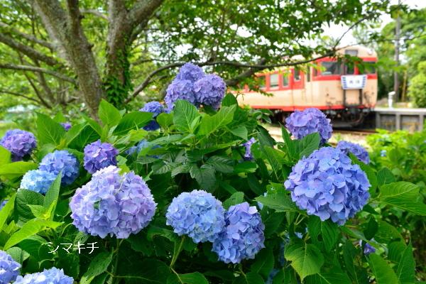 DSC_2096-aj2.jpg