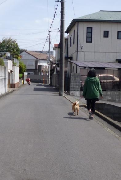 はなえお届け3(2016:4:9)