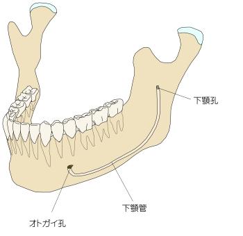 mandibular-canal-2.jpg