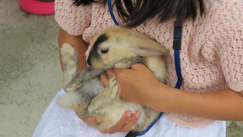 ミニウサギ3
