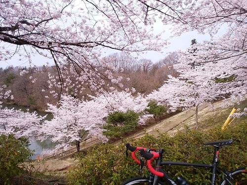 桜_20160410_2