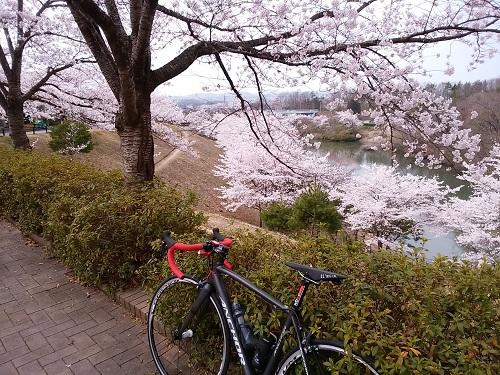 桜_20160410_1