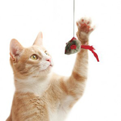 cat-toy-photo.jpg