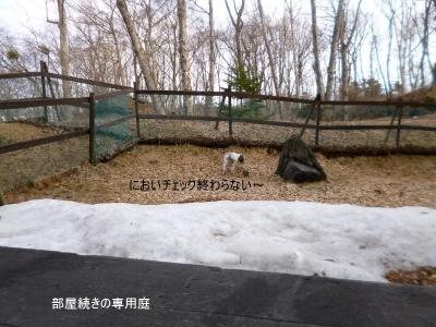 軽井沢リーオ デラックスルームの庭