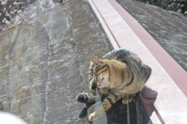 猫 NO3