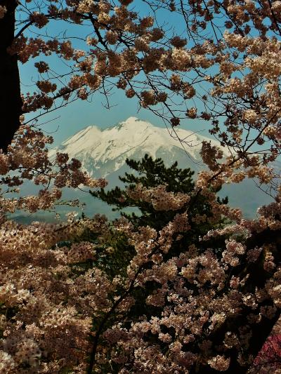 弘前さくらまつり 2016 岩木山