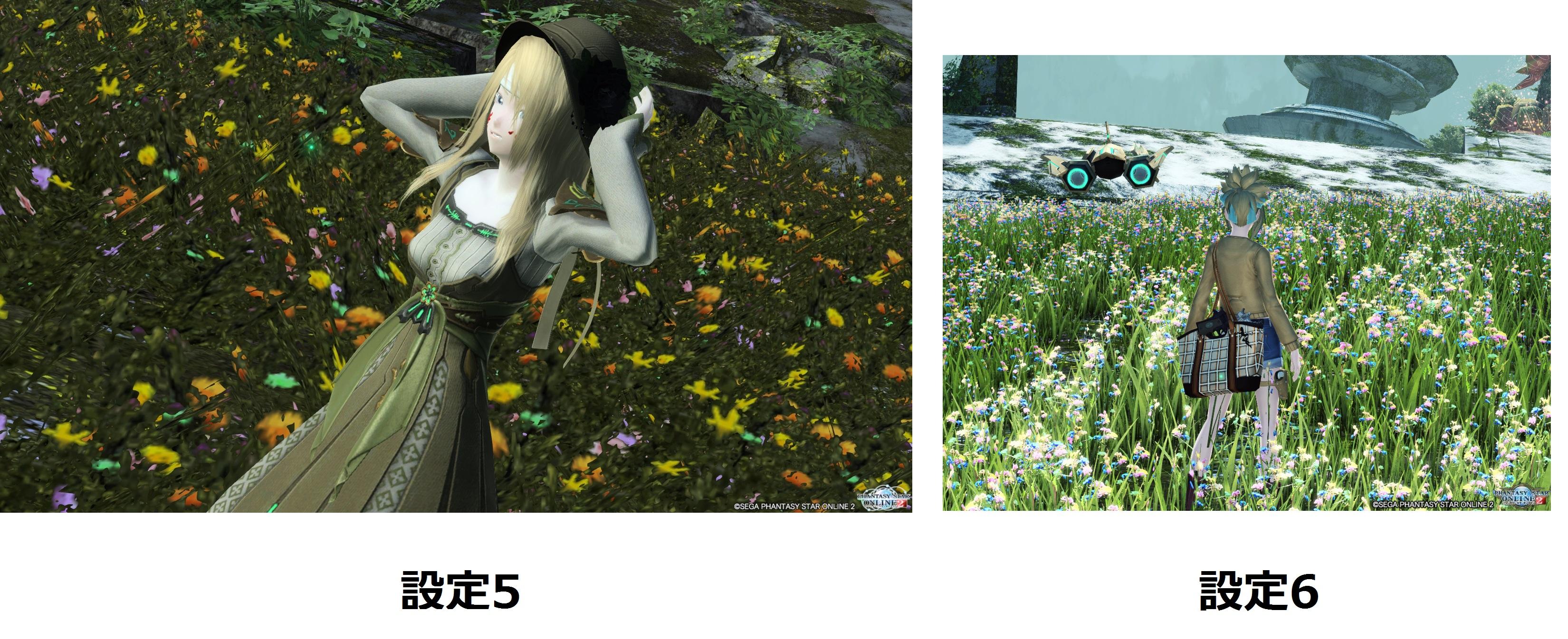 設定6で変わった、と思われる花