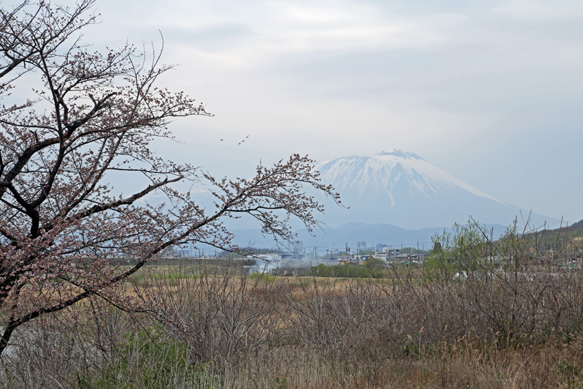 20160416手代森の一本桜と岩手山b