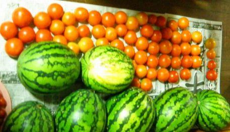 tomato2 (2)