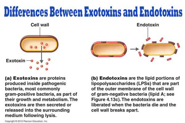 Differences-Between-Exotoxins-and-Endotoxins.jpg