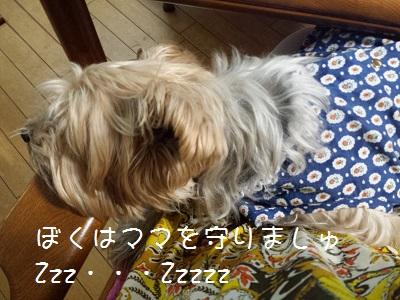 20160419_204818.jpg