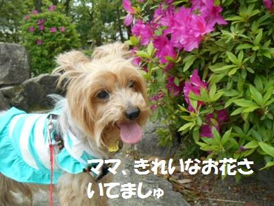 DSCN9681.jpg