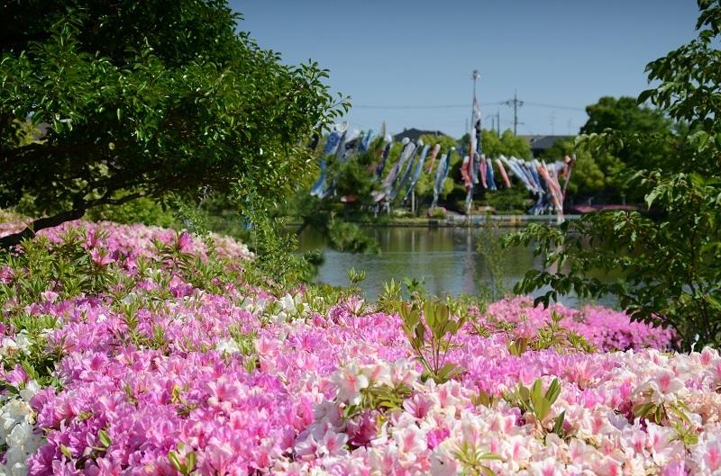 DSC_2800.jpg