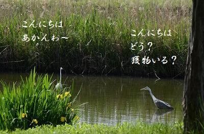 DSC_2821.jpg