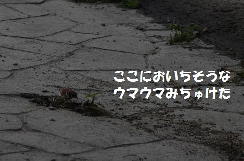 DSC_2954.jpg