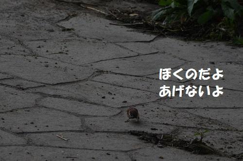 DSC_2955.jpg