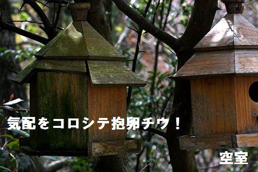 IMG_5833.jpg