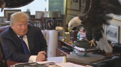 Look, This What Happen If Donald Trump Dodge a Bald Eagle - Person Of The Year 2015 - LOL