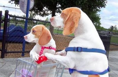 Dog Takes Puppy on Journey in Shopping Cart Cute Dog Maymo and Puppy Penny