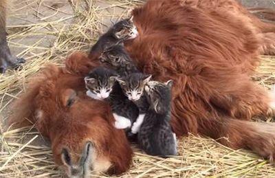 スエトシ牧場 そらまめと子猫