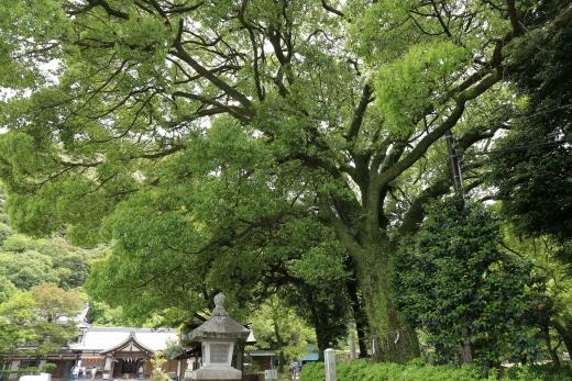 岐阜県護国神社 11
