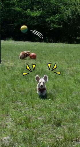 ラビット犬
