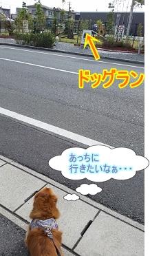 ドッグランに行きたい犬太郎!