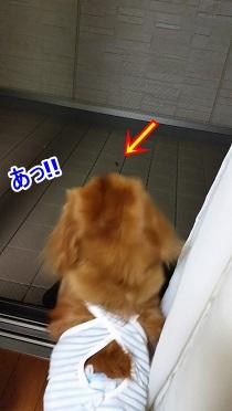 み~っけ!!