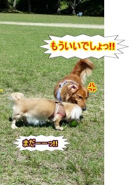 fight!!.jpg