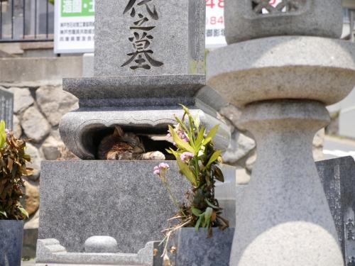 お墓に眠る猫。
