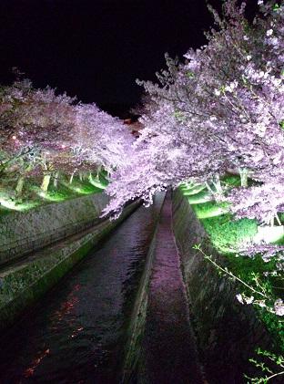 桜160408