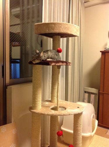 銀猫タワー