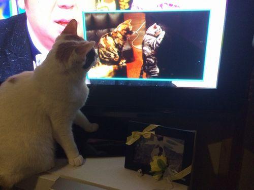 めい猫見てる