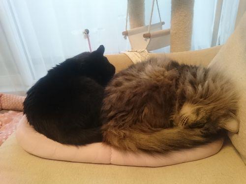 1つのベッド