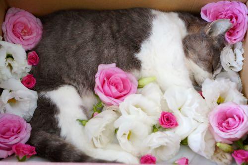 マミーお花