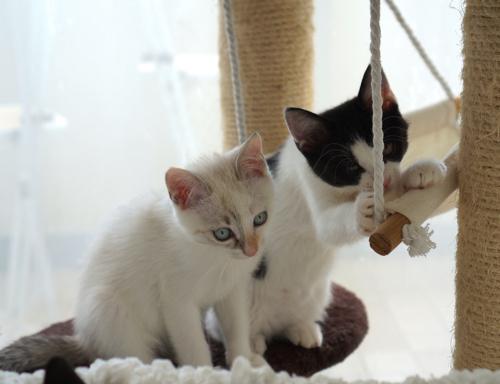 姉妹シンクロ遊ぶタワー