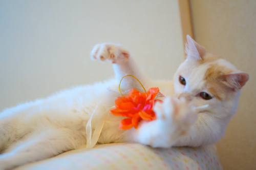 のいお花遊ぶ0