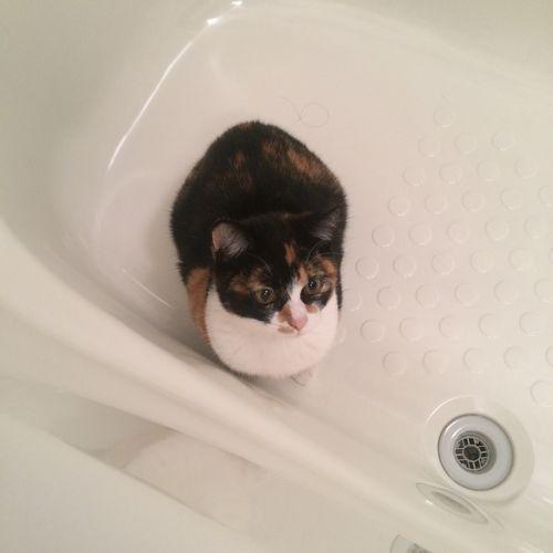 1601お風呂