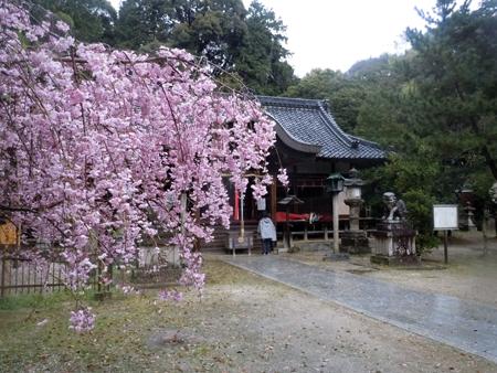 160407志都美神社