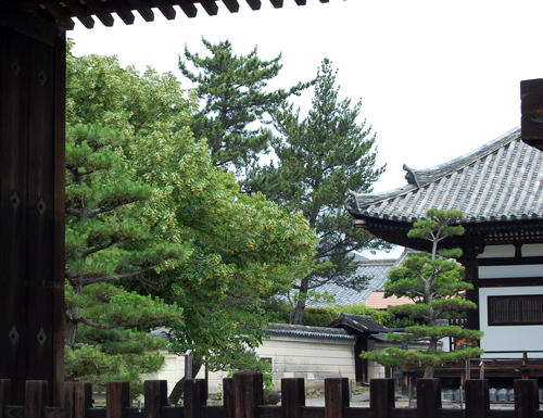 160604菩提樹