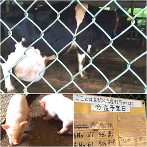 牛さん&豚さん