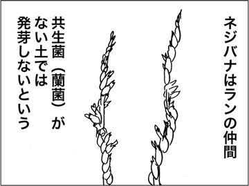 kfcp160630-6