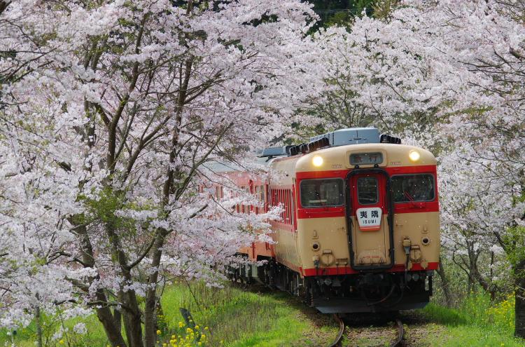 2016年04月9日 小湊 いすみ 桜_046