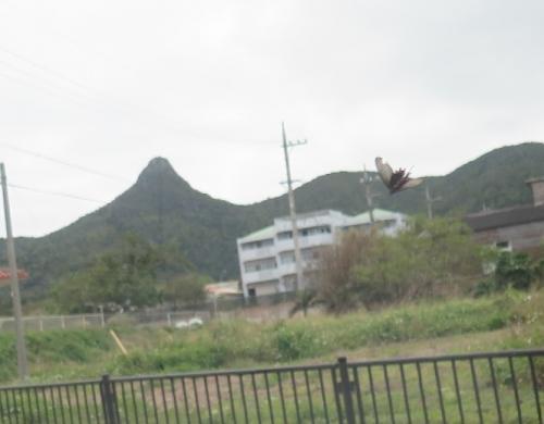 石垣島マーペーと蝶