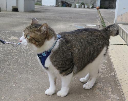 家猫ちゃん