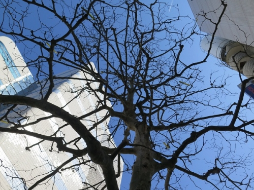 浜松市民の木