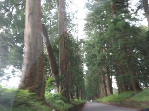 日光市杉並木